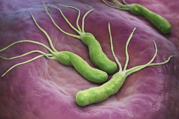 Bacterias Helicobacter pylori.