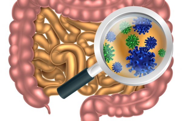 Vista de la microbiota intestinal