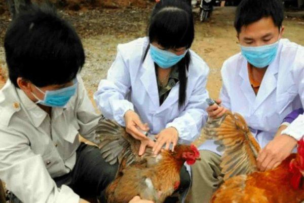 Médicos tomando muestras de aves